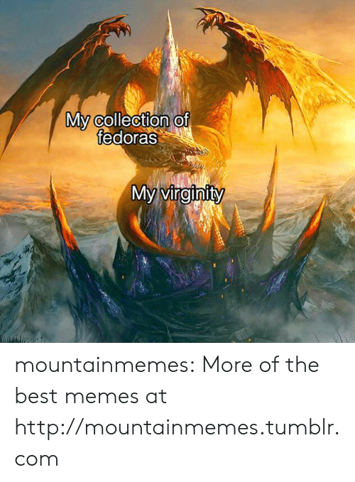 Virginity: My collection of  fedoras  My virginity mountainmemes:  More of the best memes at http://mountainmemes.tumblr.com