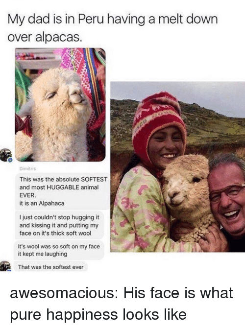 Peru: My dad is in Peru having a melt down  over alpacas  Dimitris  This was the absolute SOFTEST  and most HUGGABLE animal  EVER  it is an Alpahaca  l just couldn't stop hugging it  and kissing it and putting my  face on it's thick soft wool  It's wool was so soft on my face  it kept me laughing  That was the softest ever awesomacious:  His face is what pure happiness looks like