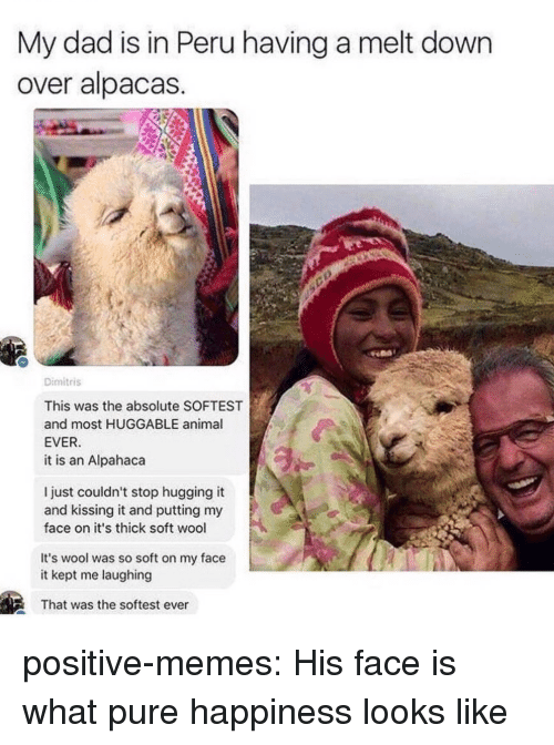 Peru: My dad is in Peru having a melt down  over alpacas  Dimitris  This was the absolute SOFTEST  and most HUGGABLE animal  EVER  it is an Alpahaca  l just couldn't stop hugging it  and kissing it and putting my  face on it's thick soft wool  It's wool was so soft on my face  it kept me laughing  That was the softest ever positive-memes: His face is what pure happiness looks like