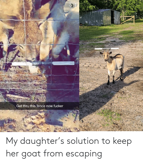 my daughter: My daughter's solution to keep her goat from escaping