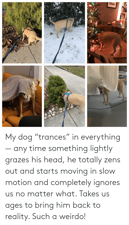"""Slow Motion: My dog """"trances"""" in everything— any time something lightly grazes his head, he totally zens out and starts moving in slow motion and completely ignores us no matter what. Takes us ages to bring him back to reality. Such a weirdo!"""