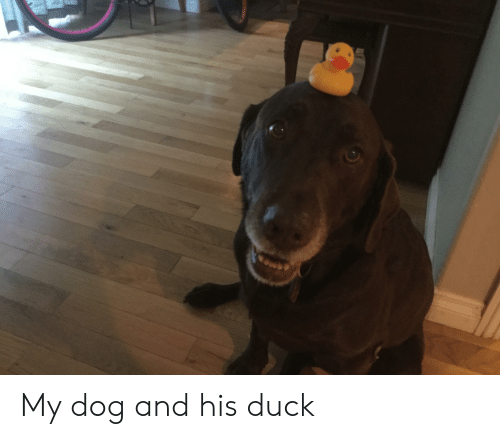 Duck, Dog, and And: My dog and his duck