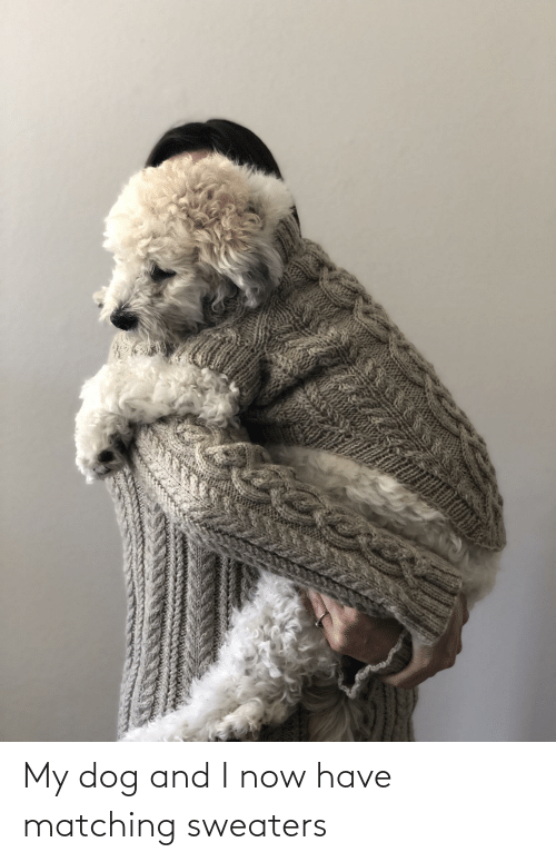sweaters: My dog and I now have matching sweaters