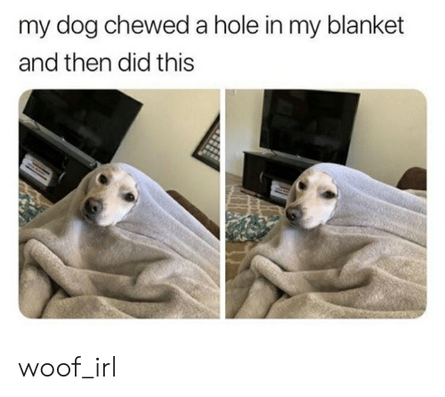 Irl, Dog IRL, and Dog: my dog chewed a hole in my blanket  and then did this woof_irl
