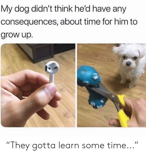 """Consequences: My dog didn't think he'd have any  consequences, about time for him to  grow up. """"They gotta learn some time..."""""""