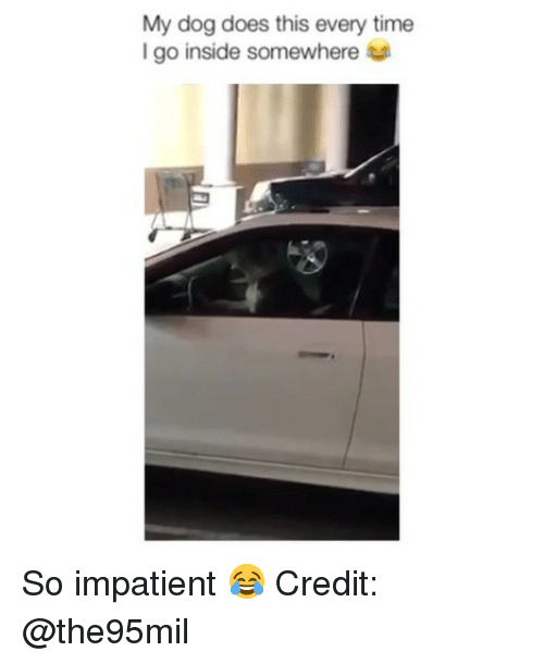 Memes, Time, and 🤖: My dog does this every time  I go inside somewhere So impatient 😂 Credit: @the95mil