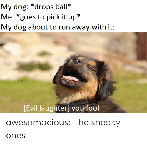Run, Tumblr, and Blog: My dog: *drops ball*  Me: *goes to pick it up*  My dog about to run away with it:  Evil laughterl you fool awesomacious:  The sneaky ones