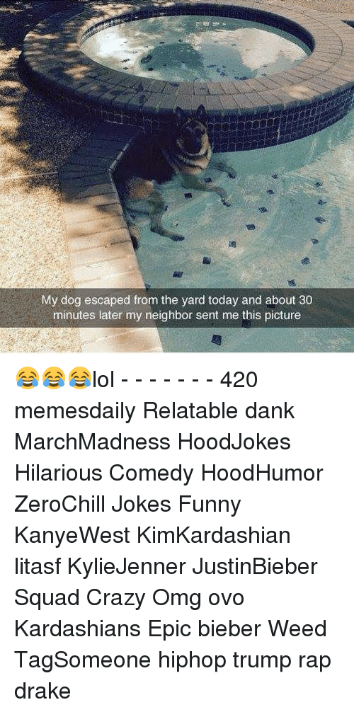 the yards: My dog escaped from the yard today and about 30  minutes later my neighbor sent me this picture 😂😂😂lol - - - - - - - 420 memesdaily Relatable dank MarchMadness HoodJokes Hilarious Comedy HoodHumor ZeroChill Jokes Funny KanyeWest KimKardashian litasf KylieJenner JustinBieber Squad Crazy Omg ovo Kardashians Epic bieber Weed TagSomeone hiphop trump rap drake