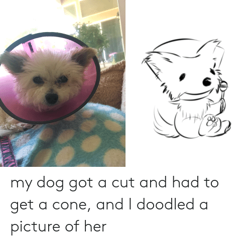 A Picture, Got, and Her: my dog got a cut and had to get a cone, and I doodled a picture of her