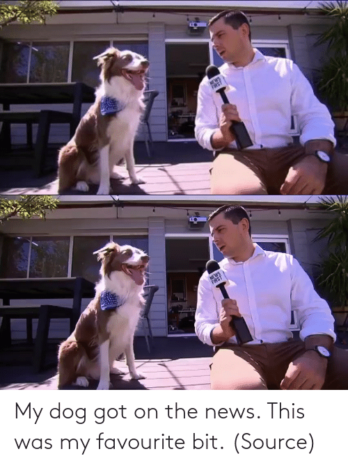 News: My dog got on the news. This was my favourite bit. (Source)