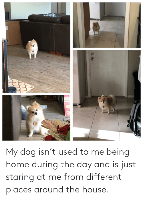 different: My dog isn't used to me being home during the day and is just staring at me from different places around the house.