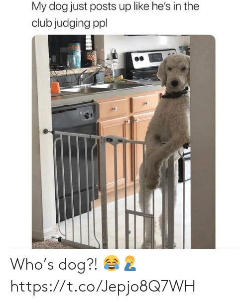 In The Club: My dog just posts up like he's in the  club judging ppl Who's dog?! 😂🤦‍♂️ https://t.co/Jepjo8Q7WH