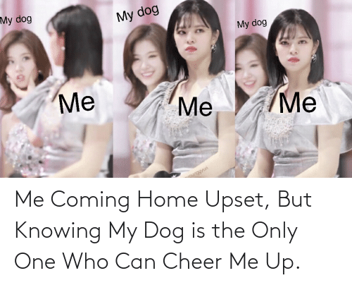 me me me: My dog  My dog  My dog  Me  Me  Me  younggyuri Me Coming Home Upset, But Knowing My Dog is the Only One Who Can Cheer Me Up.