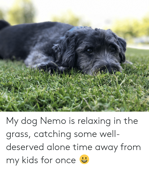 Being Alone, Kids, and Time: My dog Nemo is relaxing in the grass, catching some well-deserved alone time away from my kids for once 😀