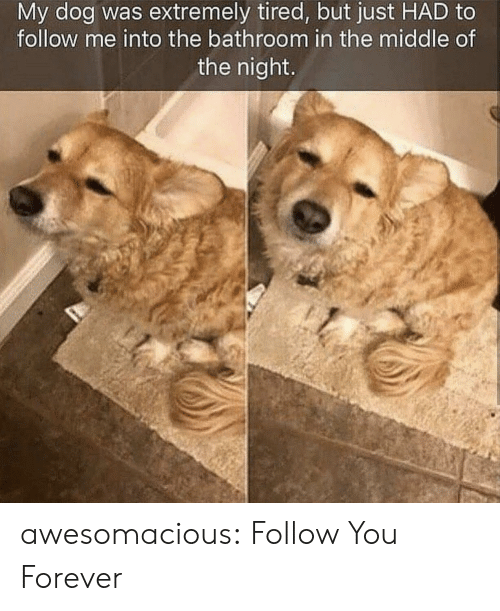 Tumblr, Blog, and Forever: My dog was extremely tired, but just HAD to  follow me into the bathroom in the middle of  the night awesomacious:  Follow You Forever