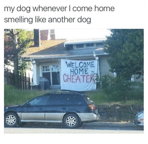 Home, Another, and Dog: my dog whenever l come home  smelling like another dog  HOME  CHEATE