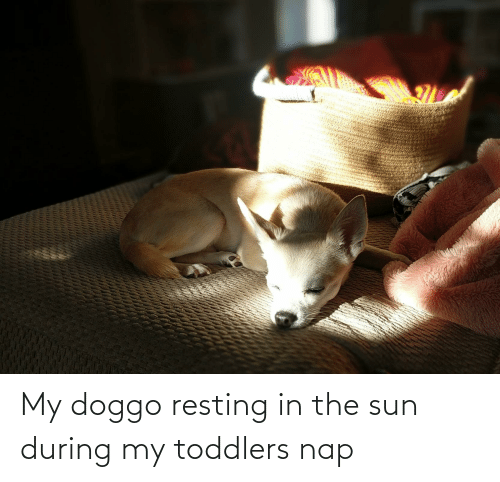 Resting: My doggo resting in the sun during my toddlers nap