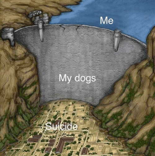 Dogs: My dogs