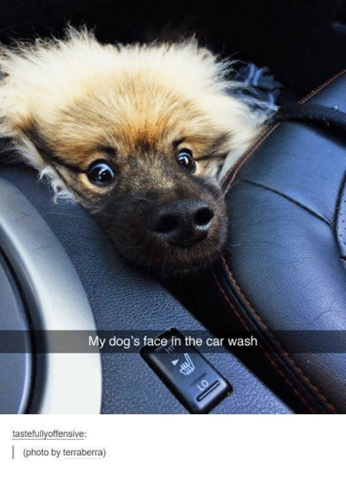 Cars, Dogs, and Humans of Tumblr: My dog's face in the car wash  tastefully offensive:  (photo by terraberra)