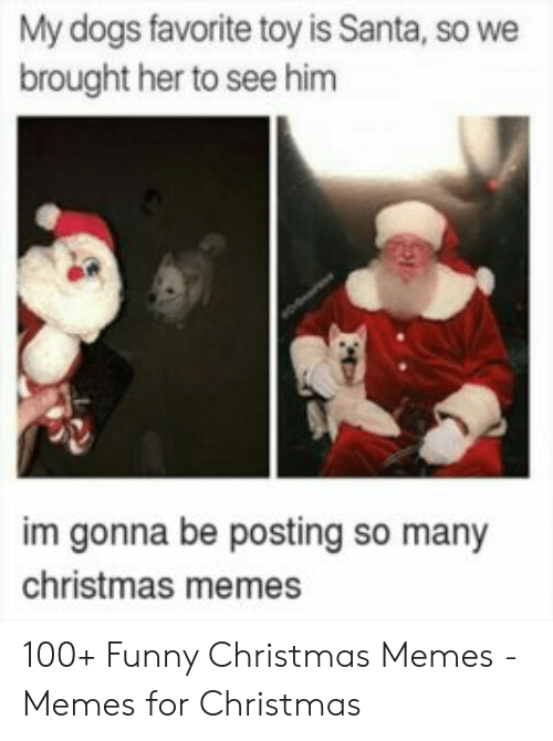 Christmas, Dogs, and Funny: My dogs favorite toy is Santa, so we  brought her to see him  im gonna be posting so many  christmas memes 100+ Funny Christmas Memes - Memes for Christmas