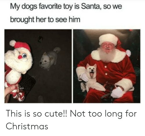 Christmas, Cute, and Dogs: My dogs favorite toy is Santa, so we  brought her to see him This is so cute!! Not too long for Christmas