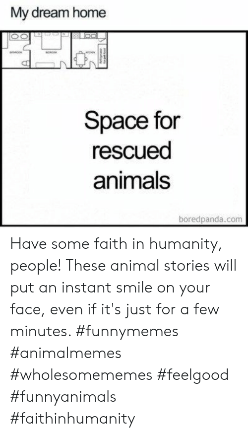 Animals, Animal, and Home: My dream home  Space for  rescued  animals  boredpanda.com  g Have some faith in humanity, people! These animal stories will put an instant smile on your face, even if it's just for a few minutes. #funnymemes #animalmemes #wholesomememes #feelgood #funnyanimals #faithinhumanity