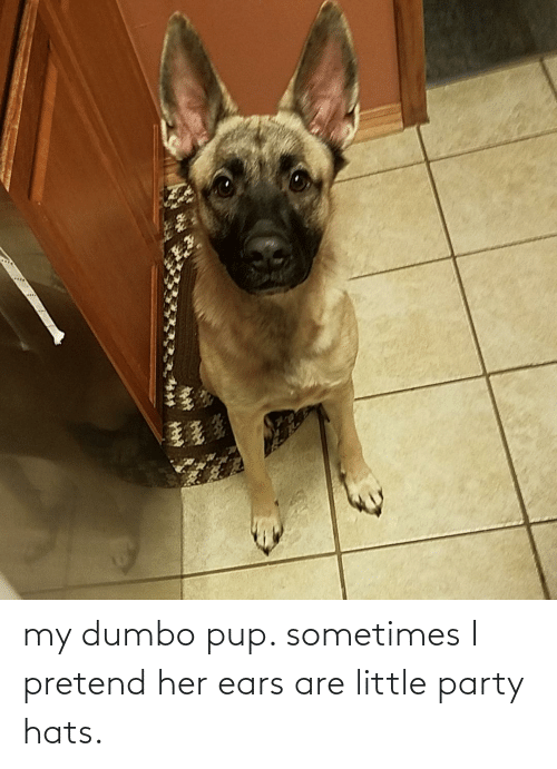 Dumbo: my dumbo pup. sometimes I pretend her ears are little party hats.
