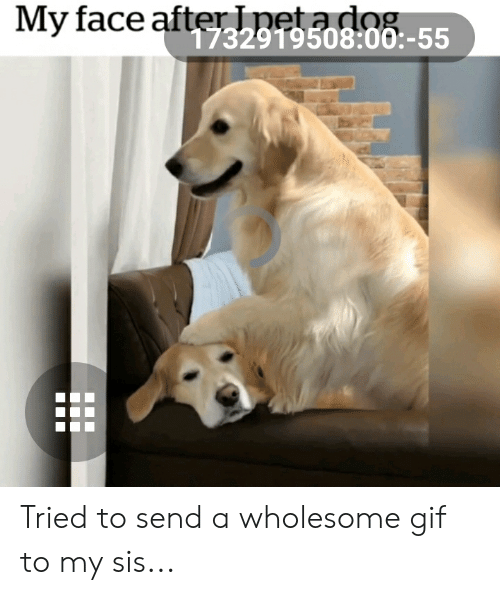 Gif, Wholesome, and Dog: My face afterlpeta dog  732919508:00:-55 Tried to send a wholesome gif to my sis...