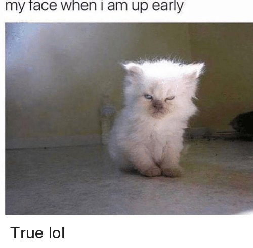 Funny, Lol, and True: my face when i am up early True lol