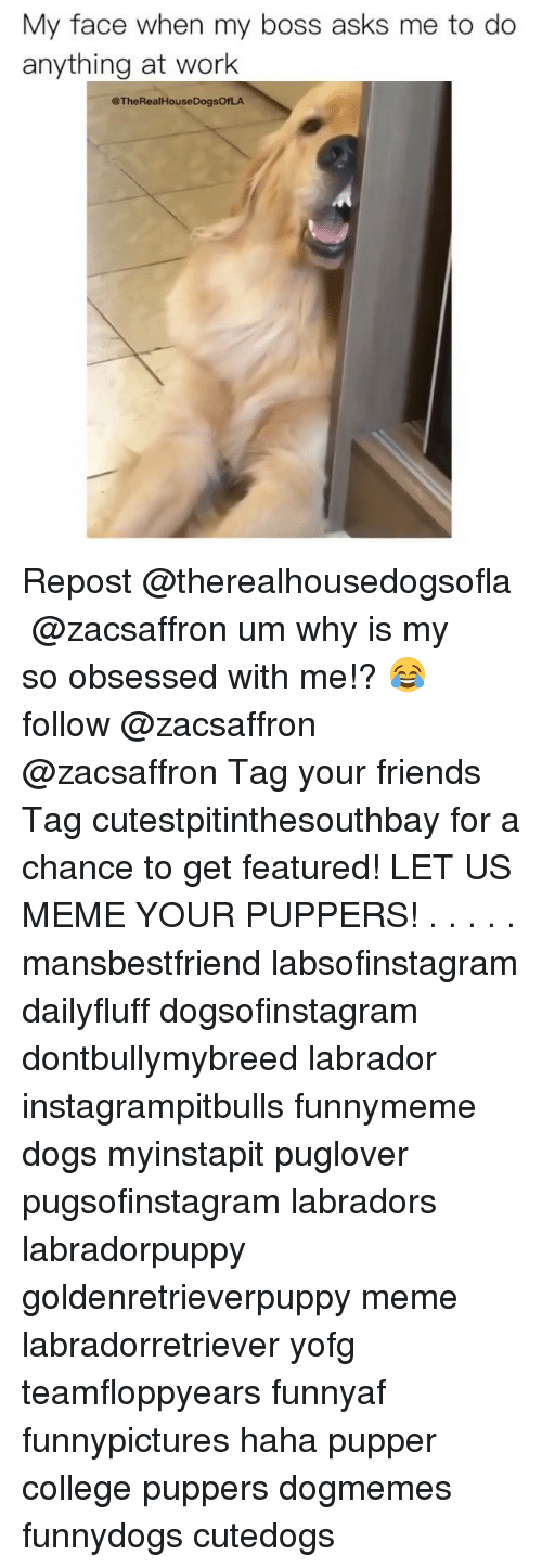 College, Dogs, and Friends: My face when my boss asks me to do  anything at work  @TheRealHouseDogsOfLA Repost @therealhousedogsofla ・・・ @zacsaffron um why is my so obsessed with me!? 😂 follow @zacsaffron @zacsaffron Tag your friends Tag cutestpitinthesouthbay for a chance to get featured! LET US MEME YOUR PUPPERS! . . . . . mansbestfriend labsofinstagram dailyfluff dogsofinstagram dontbullymybreed labrador instagrampitbulls funnymeme dogs myinstapit puglover pugsofinstagram labradors labradorpuppy goldenretrieverpuppy meme labradorretriever yofg teamfloppyears funnyaf funnypictures haha pupper college puppers dogmemes funnydogs cutedogs