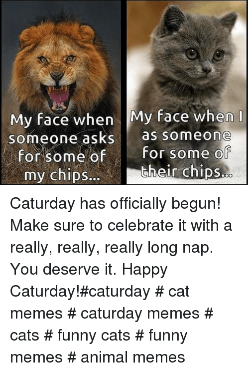 really-really-really: My face when My face when  someone asks as someone  for some ofFor some o  their chips.  my chipS... Caturday has officially begun! Make sure to celebrate it with a really, really, really long nap. You deserve it. Happy Caturday!#caturday # cat memes # caturday memes # cats # funny cats # funny memes # animal memes