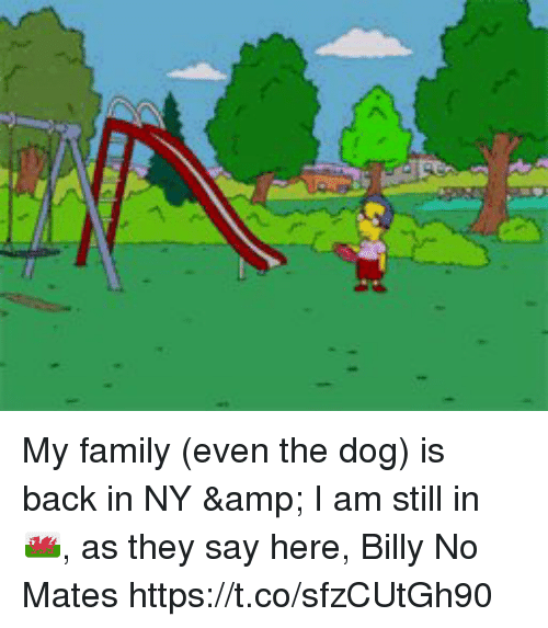 Family, Memes, and Back: My family (even the dog) is back in NY & I am still in 🏴󠁧󠁢󠁷󠁬󠁳󠁿,  as they say here, Billy No Mates https://t.co/sfzCUtGh90