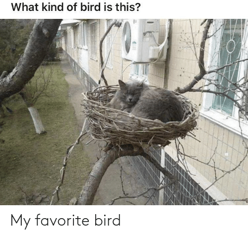 Bird,  My Favorite, and Favorite: My favorite bird