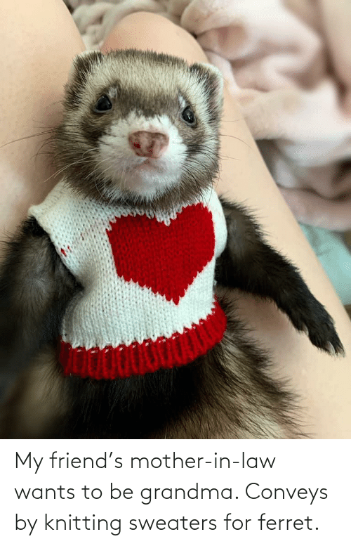 sweaters: My friend's mother-in-law wants to be grandma. Conveys by knitting sweaters for ferret.