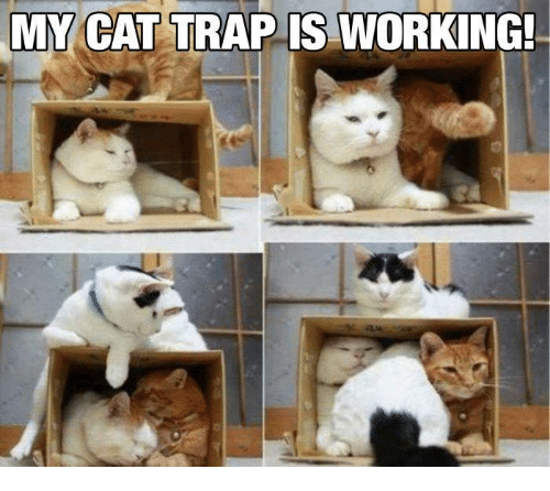 Memes, Trap, and 🤖: MY GAT TRAP IS WORKING