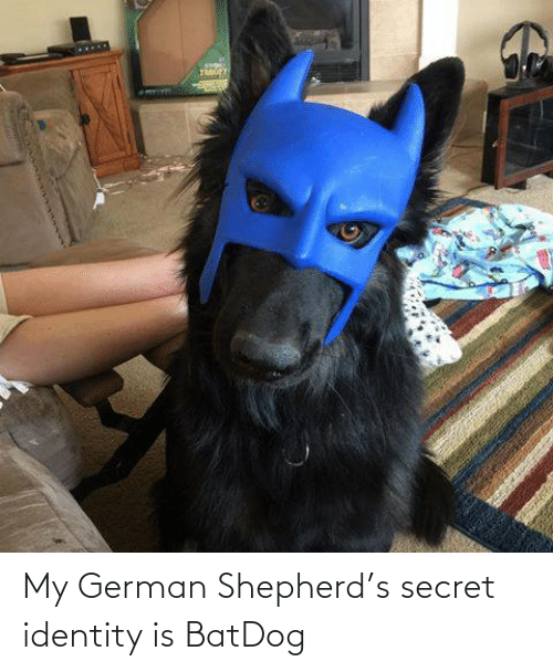 secret: My German Shepherd's secret identity is BatDog