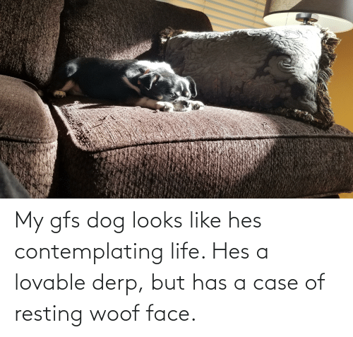 Resting: My gfs dog looks like hes contemplating life. Hes a lovable derp, but has a case of resting woof face.