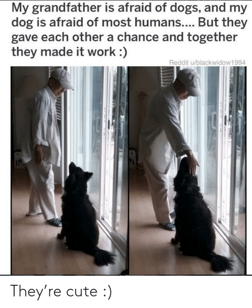 My Dog: My grandfather is afraid of dogs, and my  dog is afraid of most humans.... But they  gave each other a chance and together  they made it work :)  Reddit u/blackwidow1994 They're cute :)