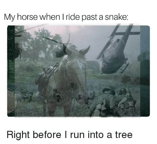 my horse: My horse when I ride past a snake: Right before I run into a tree