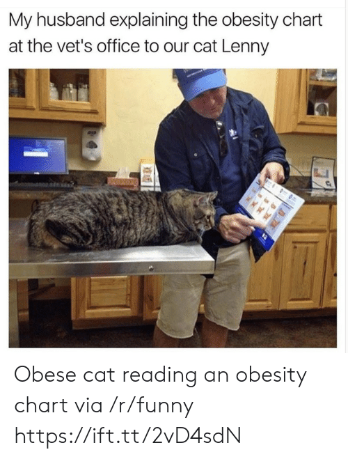 Funny, Lenny, and Office: My husband explaining the obesity chart  at the vet's office to our cat Lenny Obese cat reading an obesity chart via /r/funny https://ift.tt/2vD4sdN
