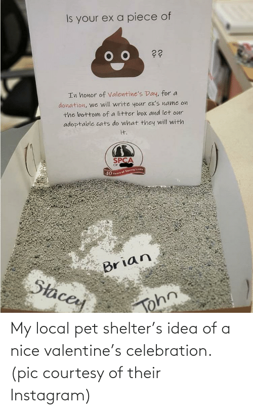 pic: My local pet shelter's idea of a nice valentine's celebration. (pic courtesy of their Instagram)