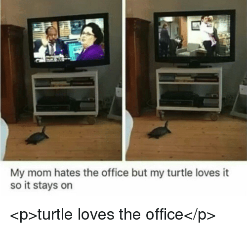 The Office, Office, and Turtle: My mom hates the office but my turtle loves it  so it stays on <p>turtle loves the office</p>