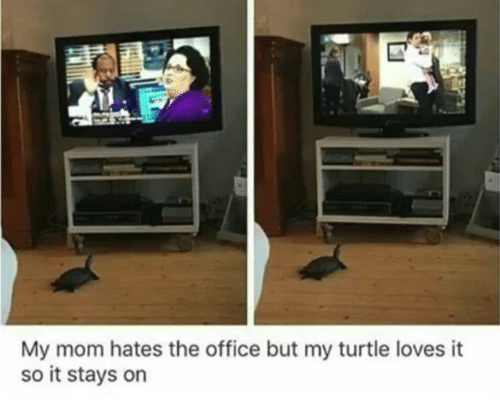 Dank, The Office, and Office: My mom hates the office but my turtle loves it  so it stays on