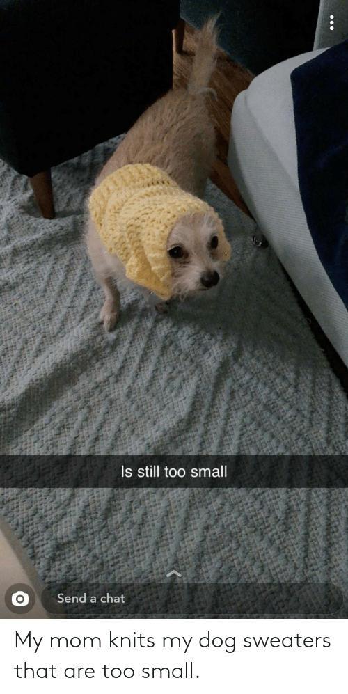 sweaters: My mom knits my dog sweaters that are too small.
