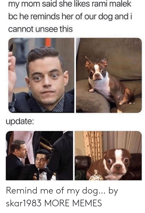 Dank, Memes, and Target: my mom said she likes rami malek  bc he reminds her of our dog and i  cannot unsee this  update: Remind me of my dog… by skar1983 MORE MEMES
