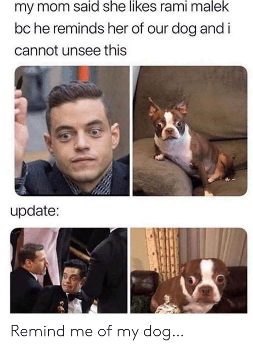 Mom, Her, and Dog: my mom said she likes rami malek  bc he reminds her of our dog and i  cannot unsee this  update: Remind me of my dog…