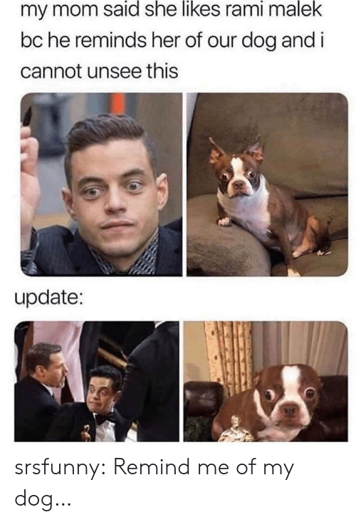 Tumblr, Blog, and Mom: my mom said she likes rami malek  bc he reminds her of our dog and i  cannot unsee this  update: srsfunny:  Remind me of my dog…