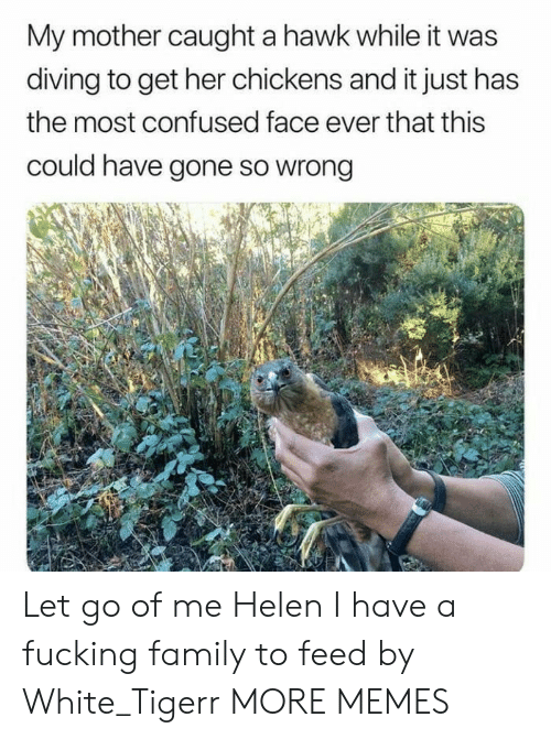 Hawkes: My mother caught a hawk while it was  diving to get her chickens and it just has  the most confused face ever that this  could have gone so wrong Let go of me Helen I have a fucking family to feed by White_Tigerr MORE MEMES