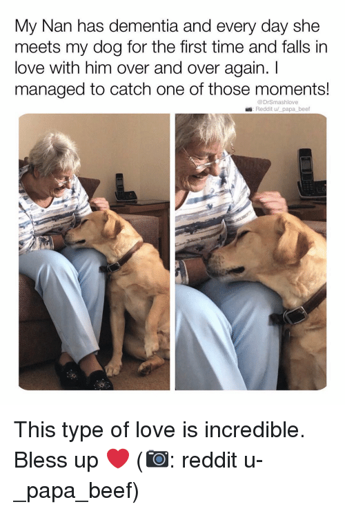 Beef, Bless Up, and Love: My Nan has dementia and every day she  meets my dog for the first time and falls in  love with him over and over again. I  managed to catch one of those moments!  @DrSmashlove  Reddit u/ papa beef This type of love is incredible. Bless up ❤️ (📷: reddit u-_papa_beef)