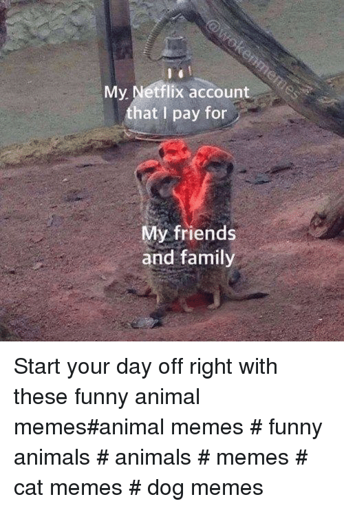 Animals, Family, and Friends: My Netflix account  that I pay for  My friends  and family Start your day off right with these funny animal memes#animal memes # funny animals # animals # memes # cat memes # dog memes